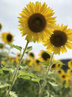 近くの花のアップの写真・画像素材[1367782]