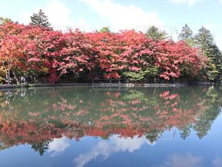 秋,紅葉,もみじ,長野,軽井沢,雲場池