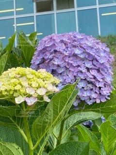 庭の緑の植物の写真・画像素材[3447992]