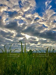 空,雲,朝陽,新潟,横越