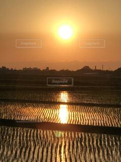 田園,田,夕陽,新潟