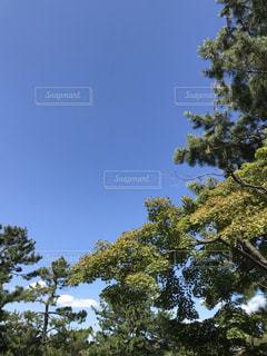 空,屋外,樹木,緑地公園,草木
