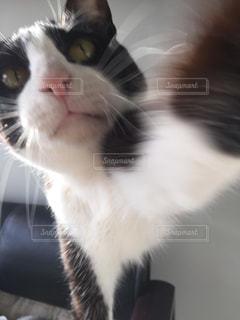 猫パンチの写真・画像素材[1255388]