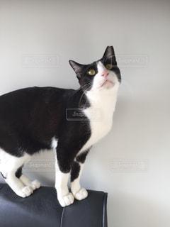 見上げる猫の写真・画像素材[1255408]