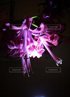 紫色の花一杯の花瓶の写真・画像素材[1395210]