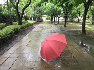 公園,雨,傘,梅雨,umbrella