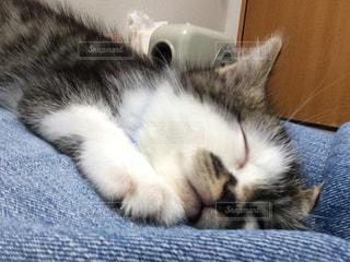 猫,寝顔,子猫,リラックス,無邪気,スヤスヤ