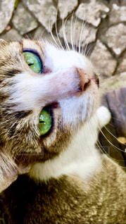緑色の目の猫の写真・画像素材[1256279]
