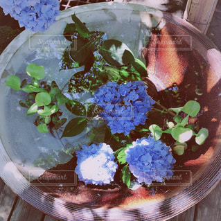 紫陽花,雨上がり