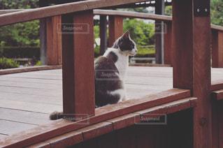 木製フェンスの上に座っている猫の写真・画像素材[1255760]