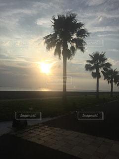 海,空,木,南国,夕陽