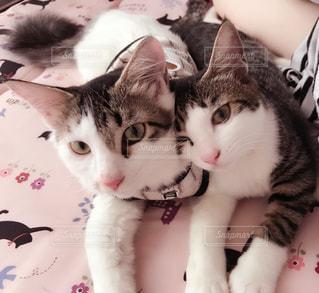 猫,癒し,仲良し姉妹,姉妹猫