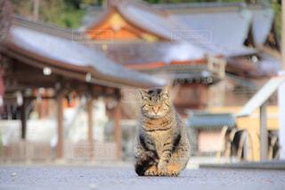 神社の前で座っている猫の写真・画像素材[1255212]