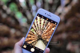 携帯電話を持つ手の写真・画像素材[1255221]