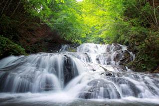 魚止めの滝の写真・画像素材[1463019]