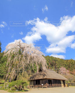青空と枝垂れ桜の写真・画像素材[1885170]