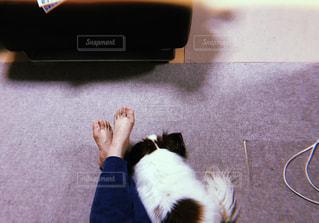 犬,ペット,ほっこり,お部屋でのんびり,いつでもいっしょ