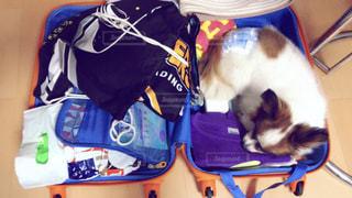 犬,ペット,キャリーバッグ,ほっこり,ベッド,寝床,お部屋でのんびり