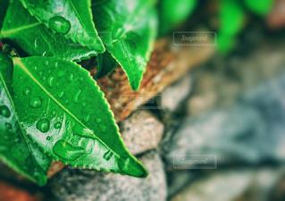 風景,街角,雨,緑,水滴,景色,新緑,露,梅雨,Green,雨粒,雨の日