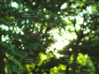 近くの木のアップの写真・画像素材[1281153]