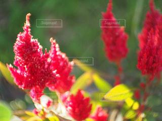 風景,花,夕日,屋外,緑,植物,赤,綺麗,夕焼け,夕暮れ,景色,鮮やか,オレンジ,キラキラ,夕景,sunset,草木