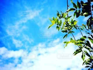 近くの木のアップの写真・画像素材[1315881]