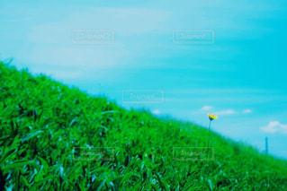 近くに緑のフィールドのの写真・画像素材[1325300]