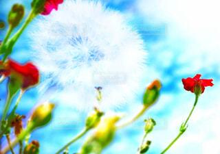 風景,空,花,夏,屋外,植物,赤,かわいい,カラフル,雲,晴れ,青空,青,黄色,水色,河原,つぼみ,キラキラ,未来,たんぽぽ,蕾,flower,綿毛,スナップ,白色,夢,旅立ち,flowers,ポジティブ,草木,出発,陽の光,輝き,蒲公英,日中,晴れの日,目標,タンポポ,フォトジェニック,飛躍,ツボミ,未来へ,インスタ映え,フライヤー