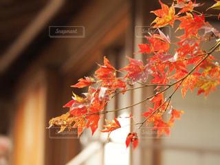 紅葉のある風景の写真・画像素材[1623577]