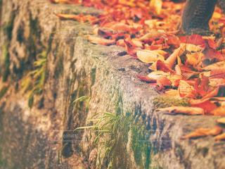 秋の風景を感じる場所 しっとりの時間の写真・画像素材[1643279]