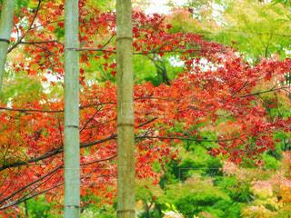 秋の風景を感じる場所 鮮やかな時間の写真・画像素材[1643299]