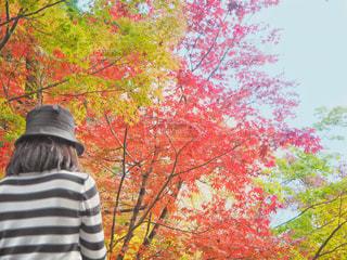 紅葉と青空と散歩の写真・画像素材[1670512]
