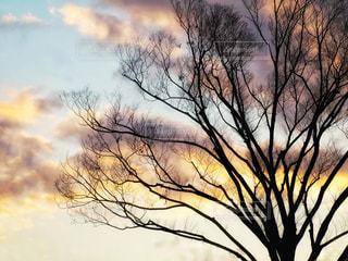 夕焼けの樹木の写真・画像素材[1870774]