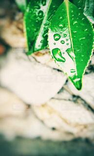 葉のアクセサリーの写真・画像素材[2108053]