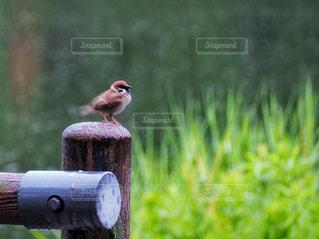 雨を振り払ってみたの写真・画像素材[2167043]