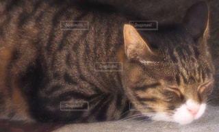 眠り猫の写真・画像素材[2293092]