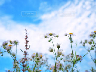 泳ぎ花の写真・画像素材[2434956]