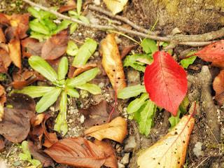 秋の訪れにの写真・画像素材[2618371]