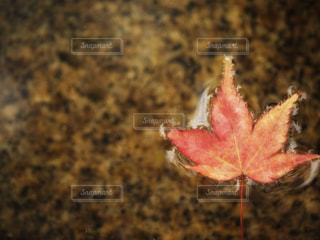 水面の秋の写真・画像素材[2618383]