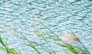 ススキと河辺の写真・画像素材[2630231]