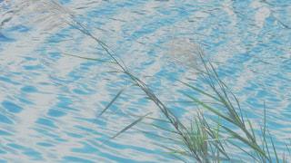 すすきと川べりの写真・画像素材[2630337]
