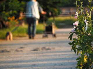 夕暮れの日課散歩の写真・画像素材[2795264]