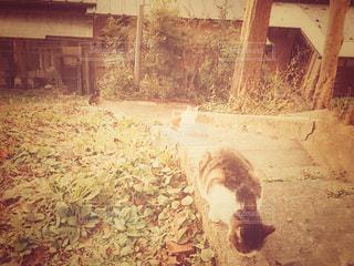 野良猫の写真・画像素材[2905849]