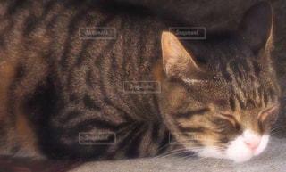 居眠り猫の写真・画像素材[2946984]