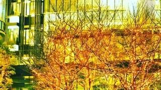 風景,建物,夜,夜景,ビル,木,屋外,大阪,綺麗,黄色,幻想的,観光地,アート,景色,光,観光,背景,樹木,イルミネーション,都会,休憩,外,キラキラ,広場,明るい,大阪駅,印象的,スナップ,雰囲気,樹,黄,LED,待ち合わせ,金,金色,輝き,室外,大阪市,煌めき,フォトジェニック,チラシ,ちらし,都会の風景,ブログ,グランフロント大阪,インスタ映え,フライヤー,シャンパンゴールド,街スナップ,champagne gold