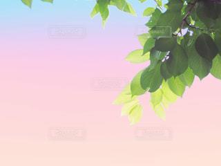 夕暮れの写真・画像素材[2983868]