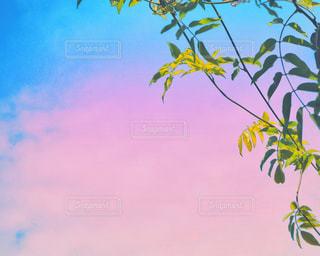 夕暮れの葉の写真・画像素材[2983867]