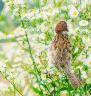 姫女苑と雀の写真・画像素材[3140342]