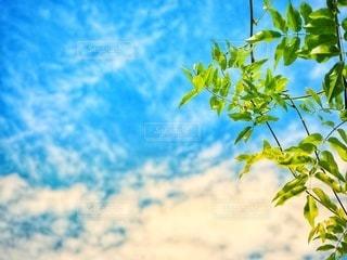 夏空に新緑の写真・画像素材[3337055]