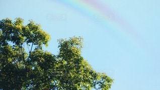空の虹の写真・画像素材[3337065]